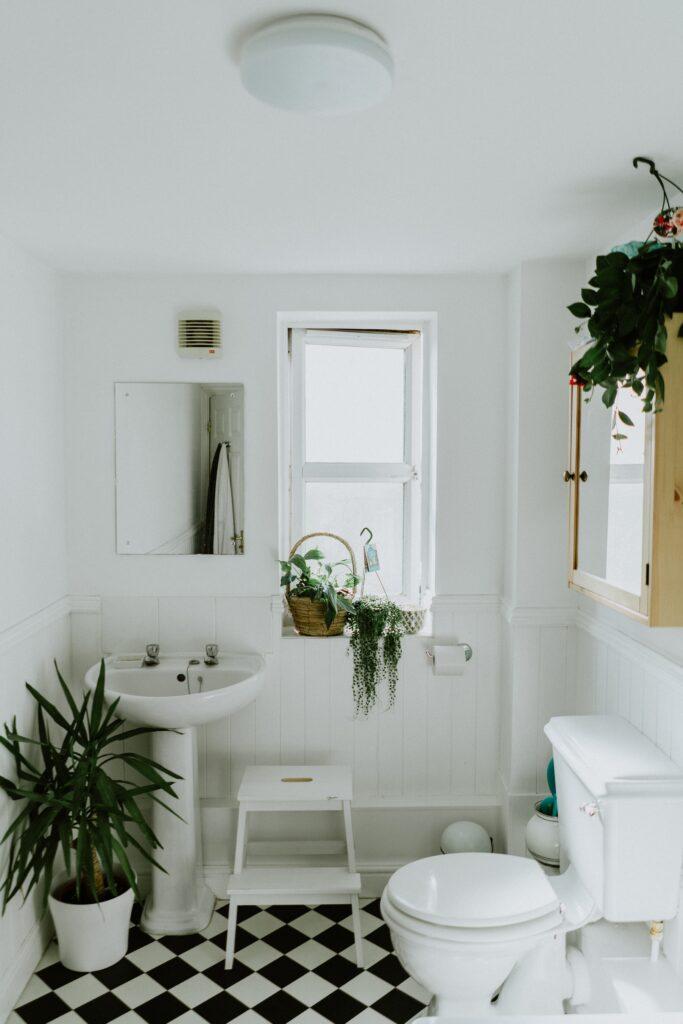 banyo bitkileri, 2021 banyo trendleri