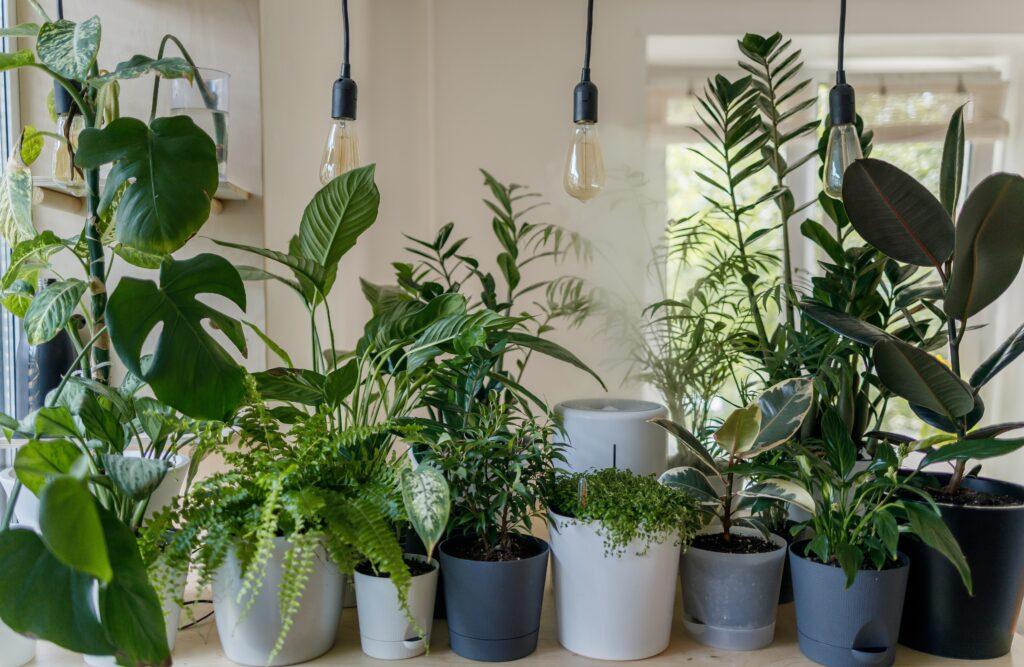 balkon tasarımları, ev bitkileri, kolye lamba