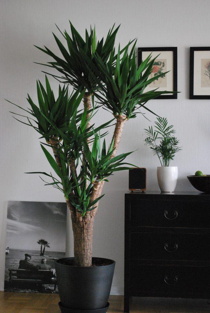 yuka bitkisi, Evde Çiçek Yetiştiriciliği