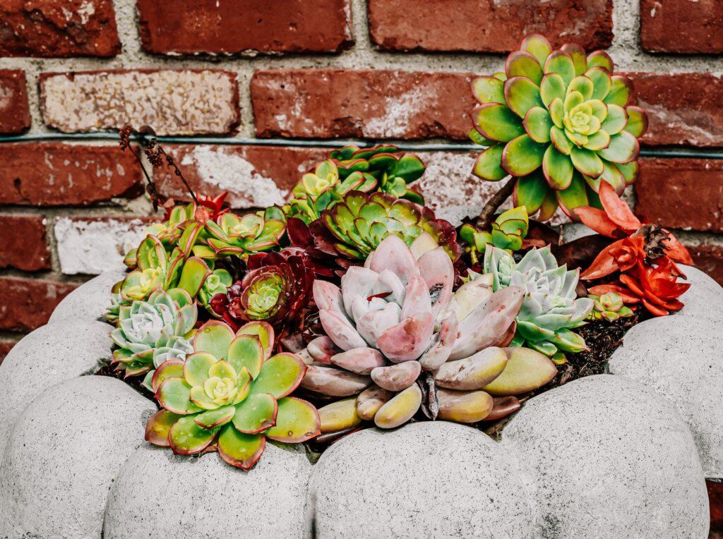 Sonbahar Çiçekleri, Lotus Kapsülleri