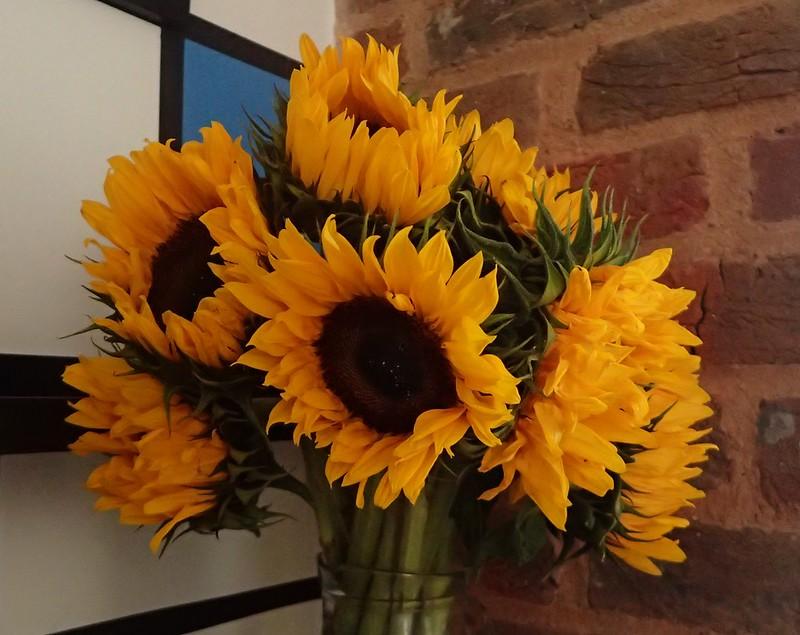 ayçiçek, sonbahar çiçeği