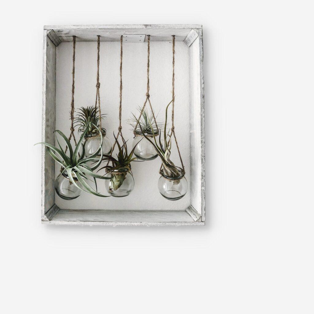 hava bitkileri