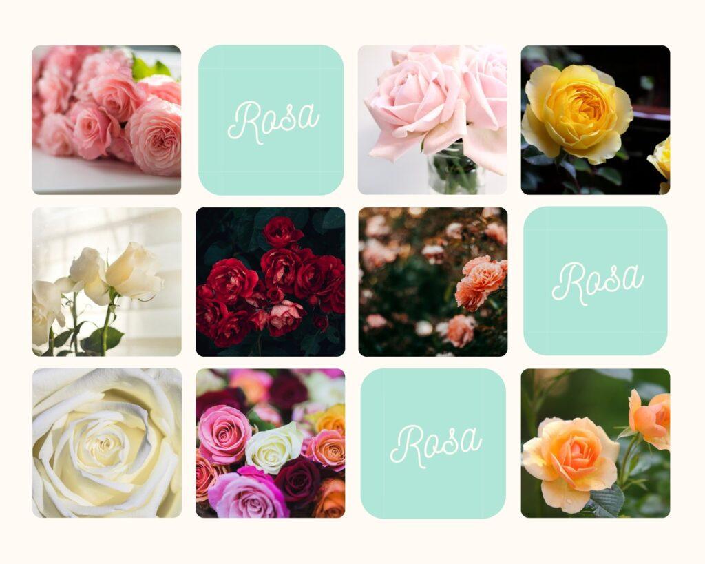 gül, beyz gül, kırmızı gül, sarı gül, Hangi çiçek ne anlama gelir