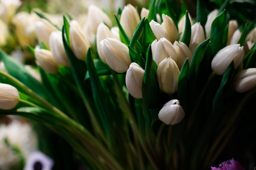 Beyaz lale anlamı, beyaz lale çiçeği