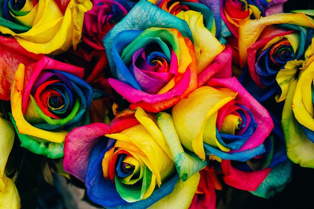 gökkuşağı gülü, Çiçekler hakkında bilgiler