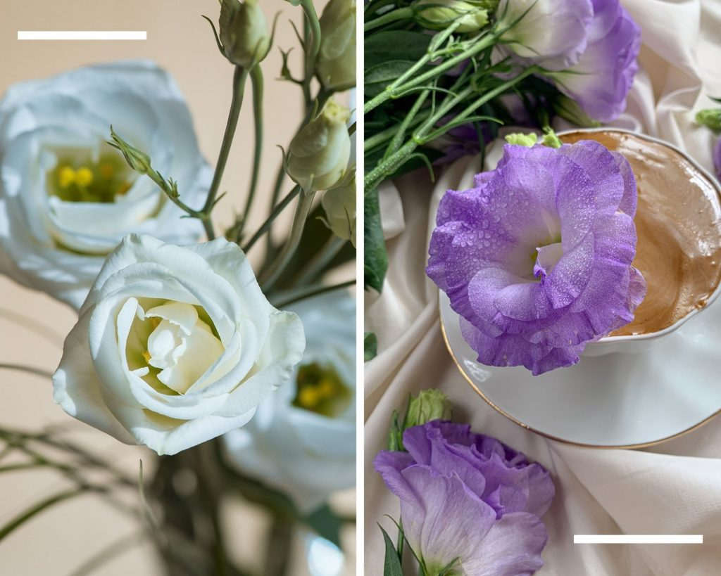 Lisyantus çiçeği anlamı, mor eustoma, beyaz eustoma