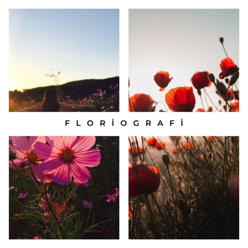 Çiçeklerin Dili, floriografi, kırmızı çiçek