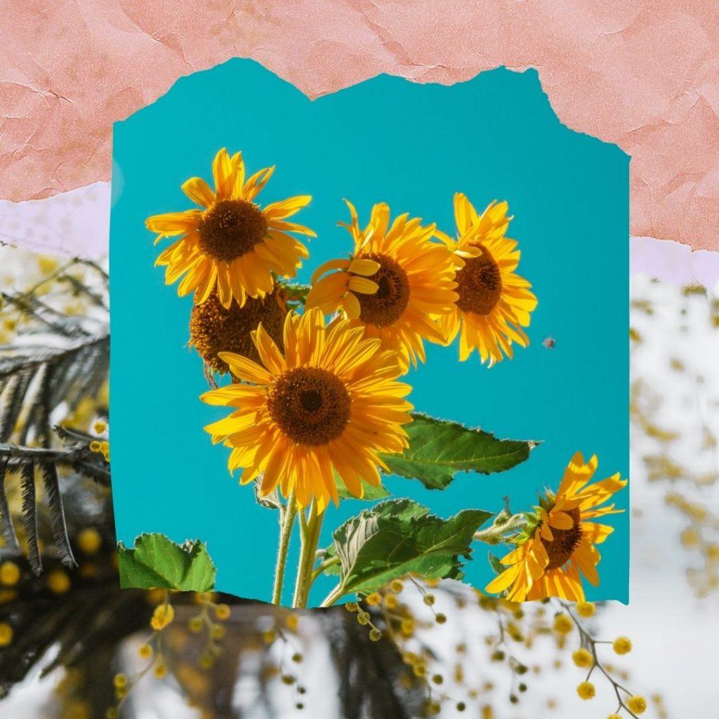 Çiçeklerin Dili, ayçiçeği, ayçiçek